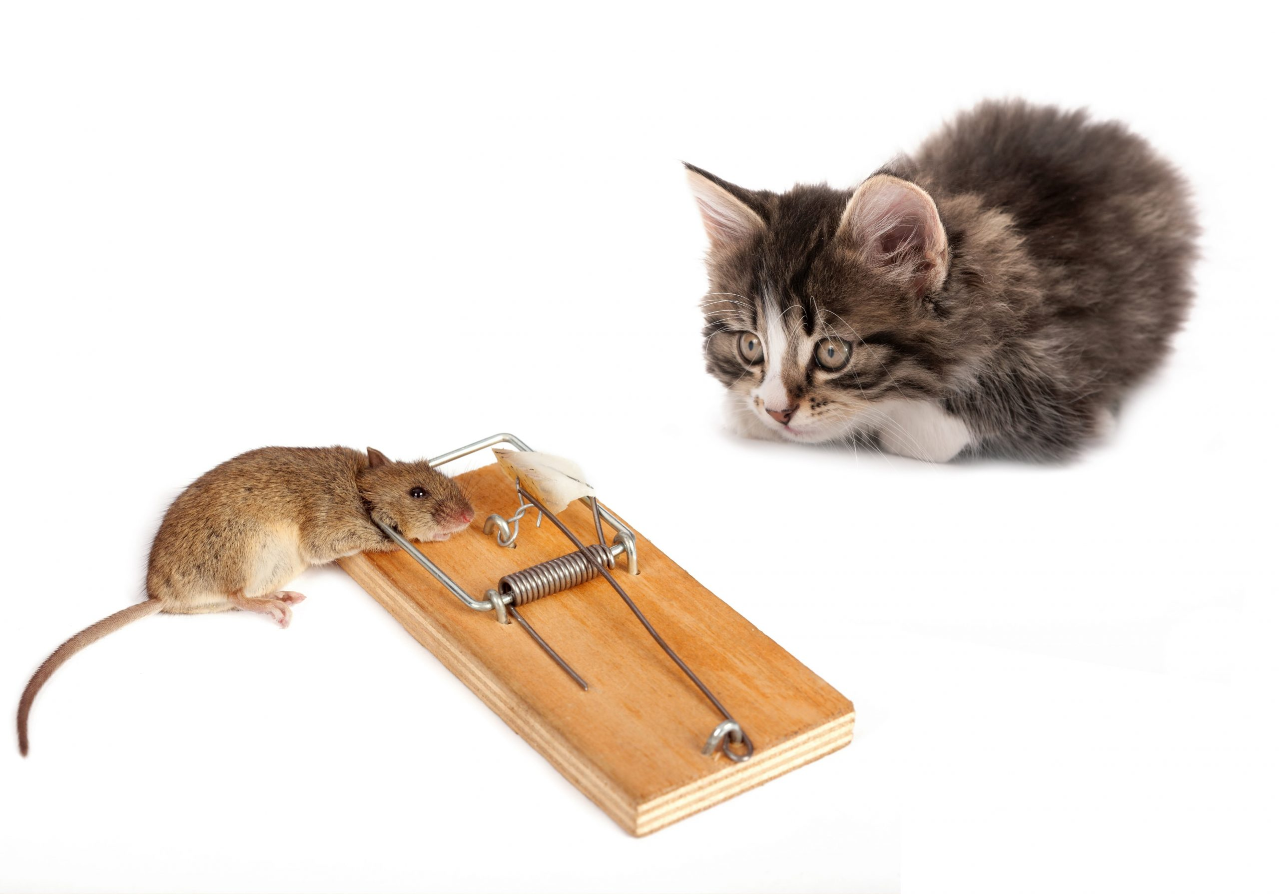 How to Use Mouse Traps Safely with Children or Pets