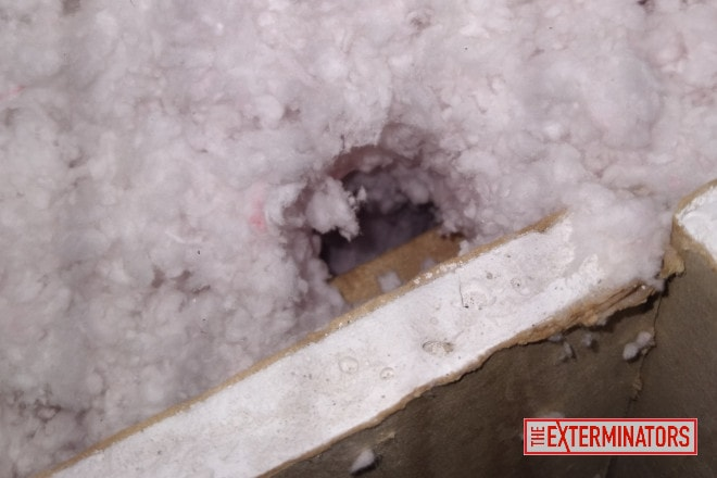 Burrow hole in Insulation